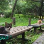 芝公園のネコ