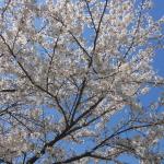 桜が散り、芽吹く季節