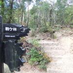 「厳島の戦い」の最終激戦地・駒ヶ林を攻略せよ。