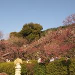 池上梅園と池上本門寺に行ってきた。