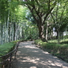 大塚・歳勝土遺跡公園に行ってきた。