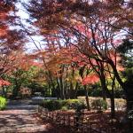 池田山公園に行ってきた。