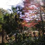 自然教育園に行ってきた。