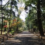 林試の森公園に行ってきた。