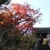 [鎌倉篇] 東慶寺に行ってきた。