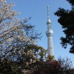 [都内の梅篇] 浅草隅田公園に行ってきた。