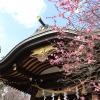 [都内の梅篇] 牛天神北野神社に行ってきた。