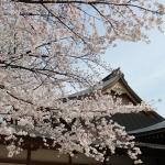 [都内の桜篇] 靖国神社に行ってきた。